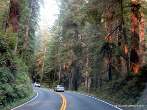 drive through redwoods